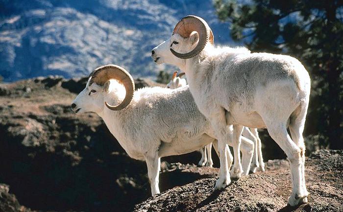 Alaska Dall Sheep Equipment Check List